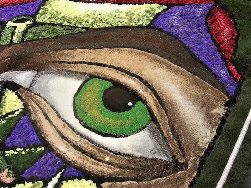 un occhio di fiori a noto (sicilia) di luciano55