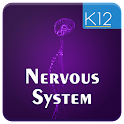 Nervous System of Mammals icon