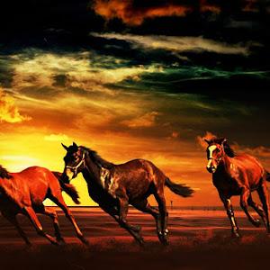 tiga kuda.jpg