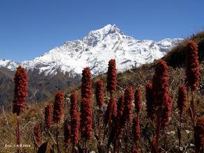 Photo: Dunagiri (7066m)