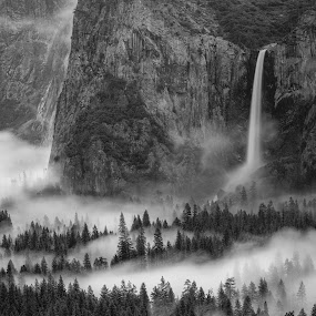 Yosemite Fog by Paul Judy - Landscapes Forests ( yosemite, relax, tranquil, relaxing, tranquility )
