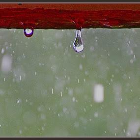 Rain drops by Debatosh Chakraborti - Artistic Objects Other Objects ( water, nature, abstract art, art, landscape )