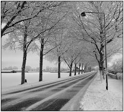 Photo: 22. december 2010 - Træerne