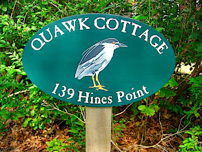 Photo: When Quawk Cottage was build (circa the 1860s), there was a rookerie of black crowned night herons (quawks).  It is gone now as are the quawks from Hines Point although some can be found on Martha's Vineyard.