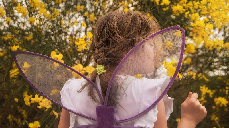 La farfalla e la ginestra di Klizio