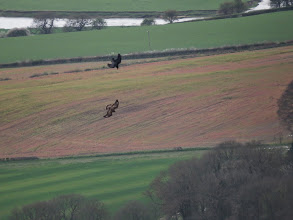 Photo: Wrekin A Raven tries to drive off a Buzzard over The Wrekin – though you can never be sure with Ravens: it may just have been 'playing', though whether the Buzzard would know that .... (Ed Wilson)