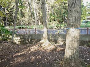 Photo: 伐採が予定されている地域(玉川上水遊歩道)伐られる予定の木に番号が振られている。