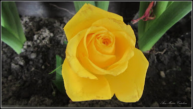 Photo: Flori din balconul meu - 2017.03.06