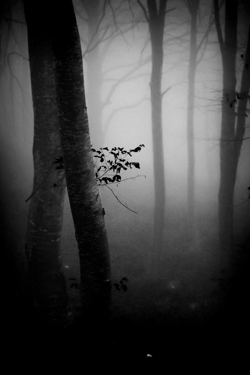 Nel bosco dei faggi di miglius57