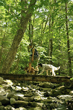 Photo: Person and dog taking a walk on the bridge at Underhill State Park