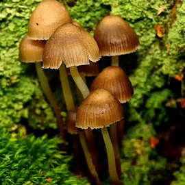 Fins et graciles by Gérard CHATENET - Nature Up Close Mushrooms & Fungi