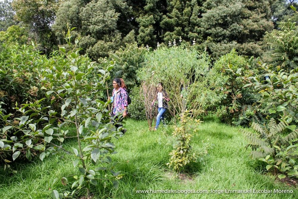 Crecimiento de los árboles, humedal El Salitre