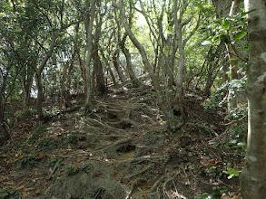 ここも木の根が多くつまづき注意