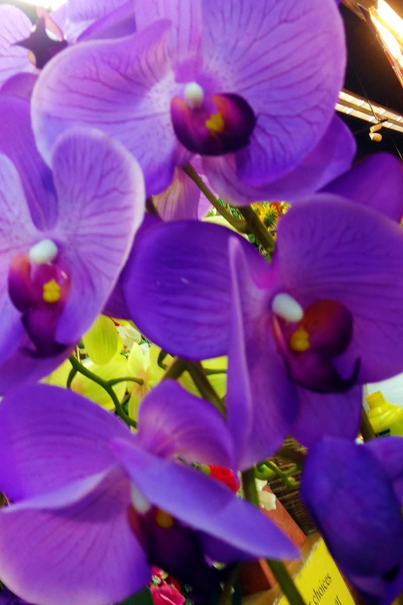 Orchidee di cesare carusio