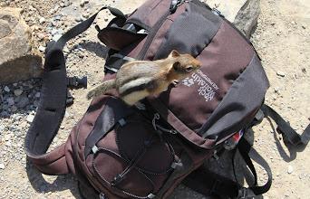 Photo: gestreiftes Hörnchen wird frech