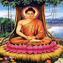 Tai lieu phat hoc pho thong - Thích Thiện Hoa icon