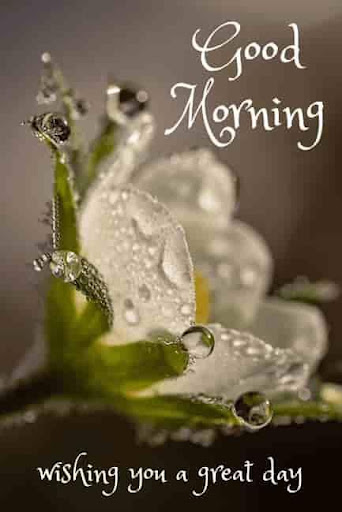 Good Morning and Good Night messages pictures by Black Snow