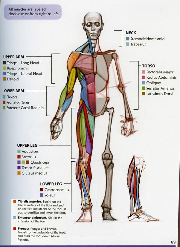 Beginner Artist Fail: Learn Anatomy