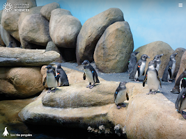 Screenshot of Pocket Penguins