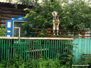 Photo: Climbing dogs!