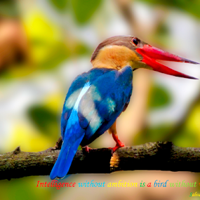 TYPO_4_2017 by Malay Maity - Typography Quotes & Sentences ( bird shots, bird, bird pictures, bird photos, birds, bird photography, birding )