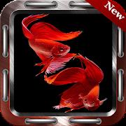 500+ Betta Fish Wallpapers icon