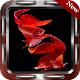 500+ Betta Fish Wallpapers icon