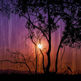 Rainy Sunset by Charlotte Hellings - Landscapes Sunsets & Sunrises ( sunset, sunrise, landscape, rain )