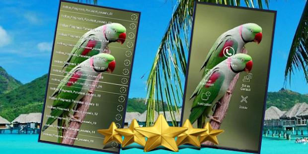 Indian Ringneck Parakeet Sound : Ringneck Parrot - náhled