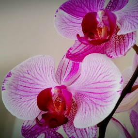 Floral by Mason Ablicki - Uncategorized All Uncategorized ( up close, nature, bright, summer, flowers )