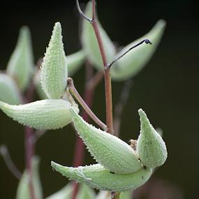by Vicki Switala Riley - Flowers Flowers in the Wild ( green, weed, brown, milkweed,  )