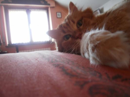 Splendore felino di fortu08