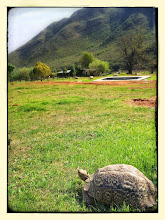 Photo: Mountain tortoise