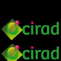 http://www.cirad.fr/en