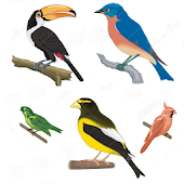 A to Z Birds Name