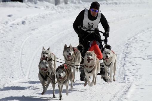 Image result for dog sled race