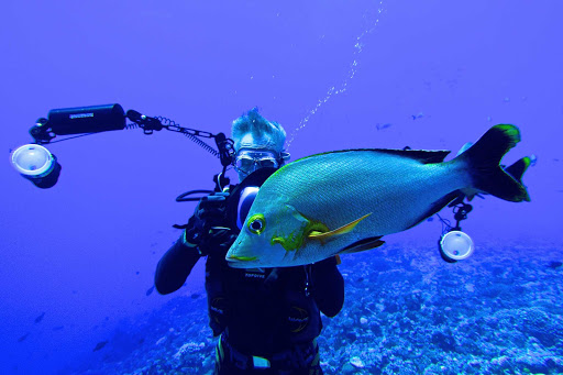 Get up close and personal with some reef fish on a Lindblad expedition to the South Pacific.