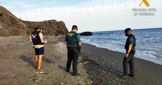 Varamiento de dos delfines, uno de ellos una cría, en la costa almeriense