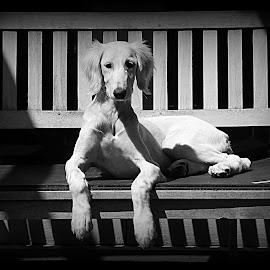 by Clare Draper - Black & White Animals