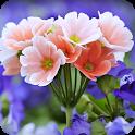 Spring Flower Wallpaper icon