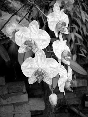L'eleganza di un fiore di ombry