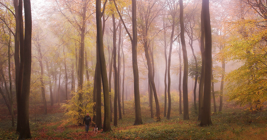 Morning Dog Walk by Ceri Jones - Landscapes Forests ( wood dog walk autumn )