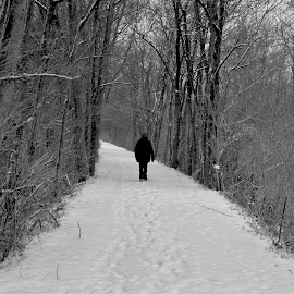 Winter's Walk by Jeff Sluder - Black & White Landscapes ( snow, gilmore ponds )