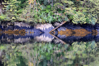 Photo: Reflections along the shore, Misty Fjords
