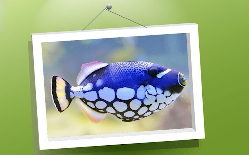 Zvířata Puzzle: Ryby - náhled