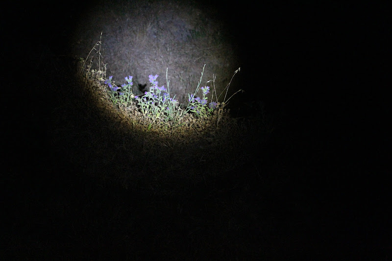 Luci nella notte di Merlograziano