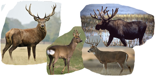 Deer Hunting Calls Apps On Google Play