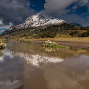 Puddle reflection by George Marcu - Landscapes Mountains & Hills ( mountain, reflection, phototour, patagonia, hike, track, hikers, chile, flower )