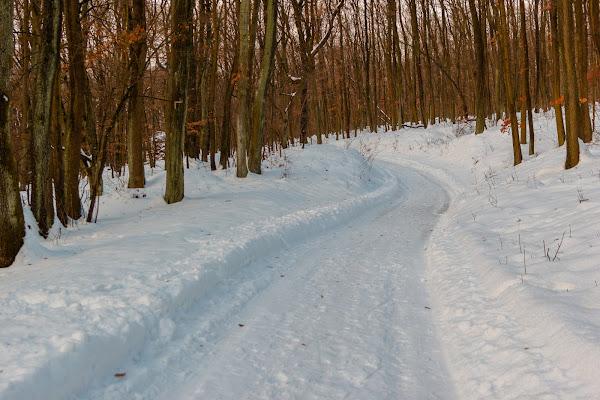 bosco d'inverno di kareas
