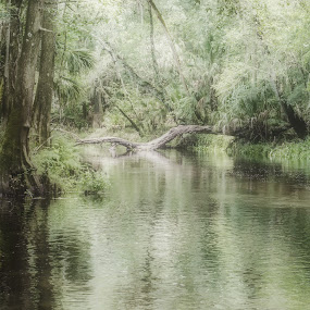 Dusky Day by Don Kuhnle - Landscapes Underwater ( pastel, foggy, fog, foggy morning, florida, tampa, hillsboro, lazy river, river,  )